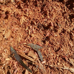 Forest-Mulch